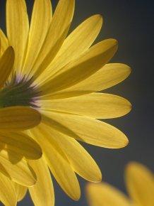 flower-1536219