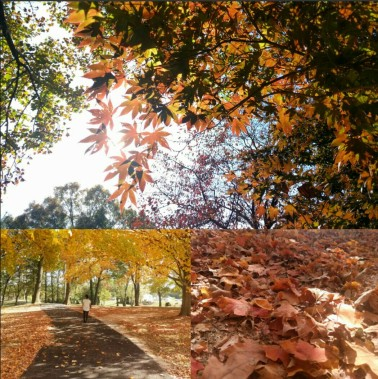 autumn again 10-29-16